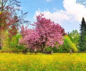 Puzle Árvore de cereja na Primavera