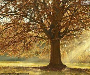 Puzle Árvore decídua no outono