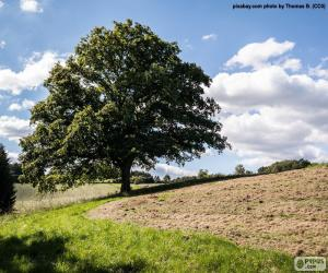 Puzle Árvore no campo arado