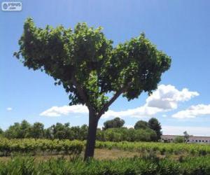 Puzle Árvore no campo