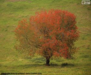 Puzle Árvore no outono