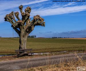 Puzle Árvore podada