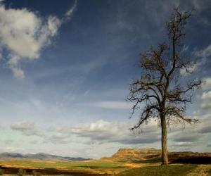 Puzle Árvore solitário em uma paisagem com pouca vegetação