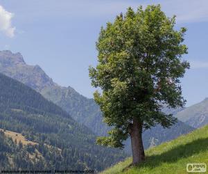 Puzle Árvore