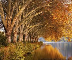 Puzle Árvores ao beira do lago no outono