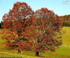 Puzle Árvores de folha caduca