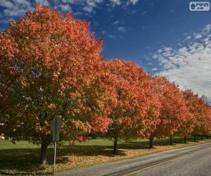 Puzle Árvores no outono