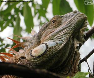 Puzle A cabeça de uma iguana