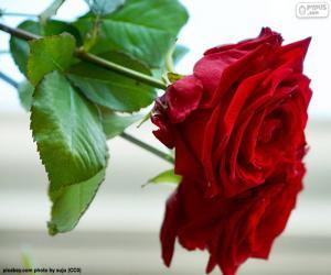 Puzle A linda rosa como um presente para a mamãe