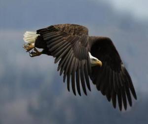 Puzle Águia voando