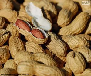 Puzle Amendoim em casca