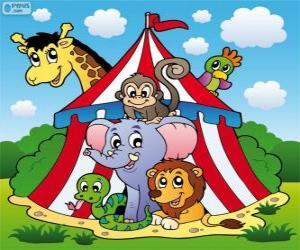 Puzle Animais de circo