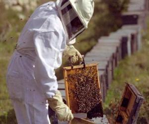 Puzle Apicultor trabalhando com vestuário especial na colméia para coletar mel