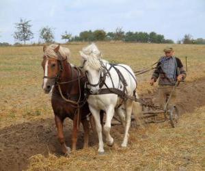 Puzle Aração com paves cavalos
