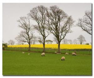 Puzle Árvores no campo Inglês