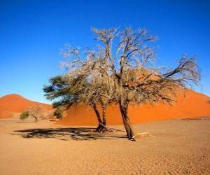 Puzle Árvores no deserto