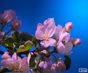 Puzle As flores de maçã