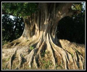 Puzle As raízes das árvores