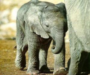 Puzle Bebê elefante com sua mãe