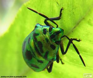 Puzle Besouro Verde