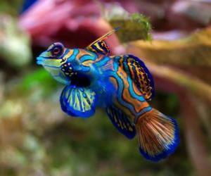 Puzle Bom peixe tropical