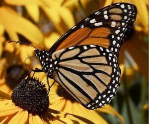 Puzle borboleta em uma flor amarela