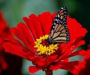 Puzle Borboleta em uma flor
