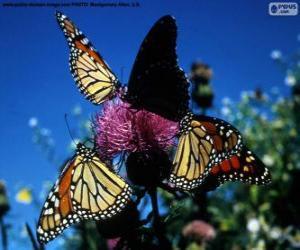 Puzle Borboleta-monarca