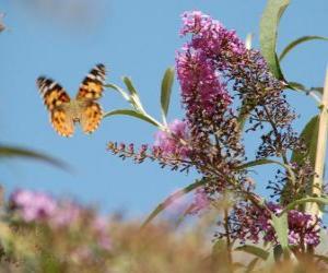Puzle Borboleta voando sobre as flores