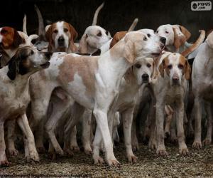 Puzle Cães de caça