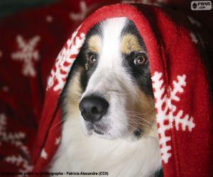 Puzle Cão de Natal