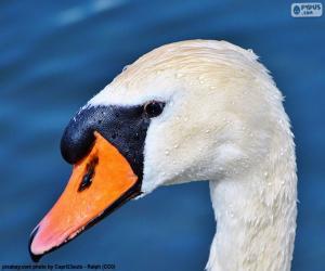 Puzle Cabeça de cisne
