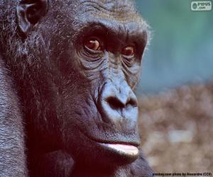Puzle Cabeça de gorila