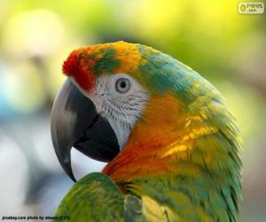 Puzle Cabeça de papagaio