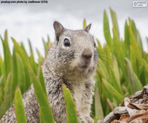 Puzle Cabeça do esquilo