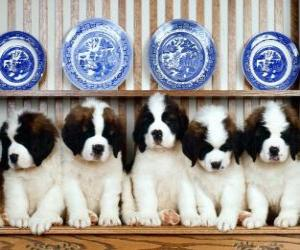 Puzle Cachorros São-bernardo