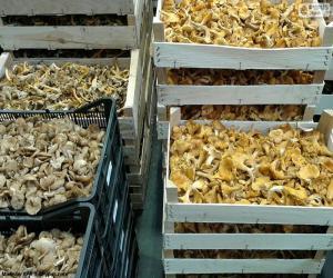 Puzle Caixas de cogumelos