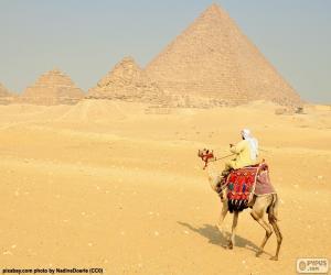 Puzle Camelo frente das pirâmides