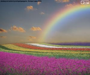 Puzle Campo de flores