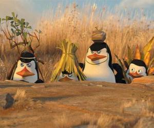 Puzle Camuflada Penguins