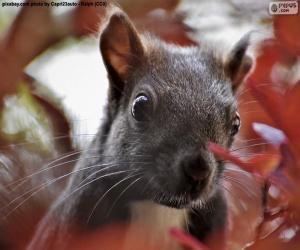 Puzle Cara de esquilo