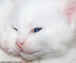 Puzle Cara de gato branco