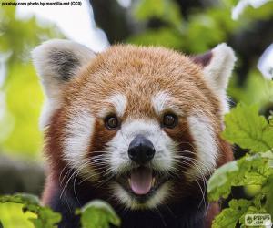 Puzle Cara o panda-vermelho