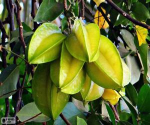Puzle Carambola, frutas exóticas