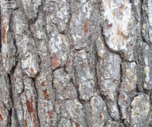 Puzle Casca de pinheiro