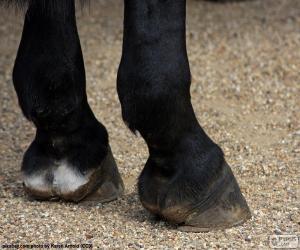Puzle Cascos de cavalo