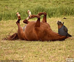 Puzle Cavalo chafurdar