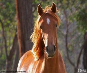 Puzle Cavalo marrom da frente