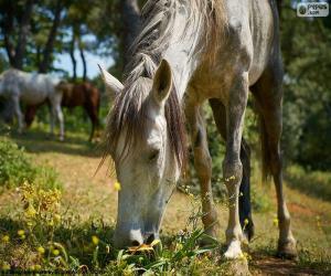 Puzle Cavalo pastando