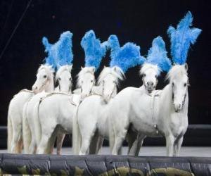 Puzle Cavalos agindo em um circo